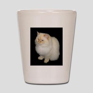 Zeus the White Himalayan Cat Shot Glass