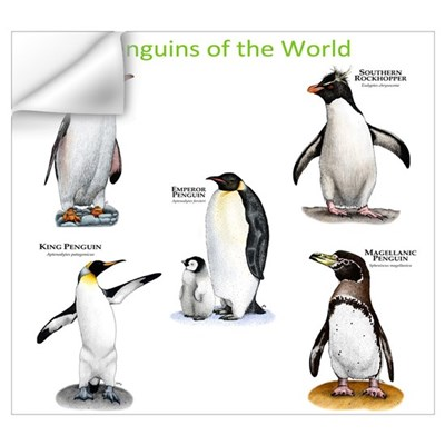 Penguins of the World Wall Art Wall Decal