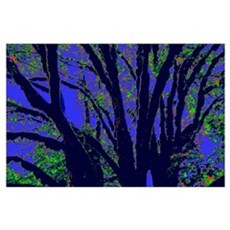 Black Tree Branches Wall Art Poster