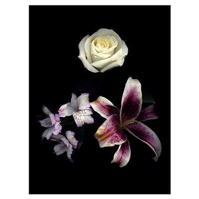 Mixed 004 Wall Art Canvas Art