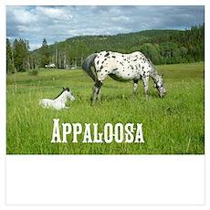 Beautiful Appaloosa Wall Art Poster