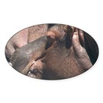 I Choose to Snooze Hippo Photo Sticker (Oval)