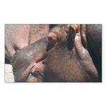 I Choose to Snooze Hippo Photo Sticker (Rectangle)