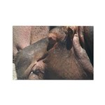 I Choose to Snooze Hippo Photo Rectangle Magnet (1