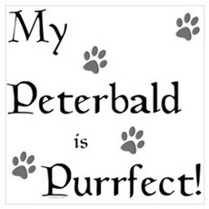 Purrfect...Peterbald Wall Art Poster