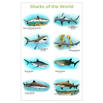 Sharks of the World Wall Art Framed Print