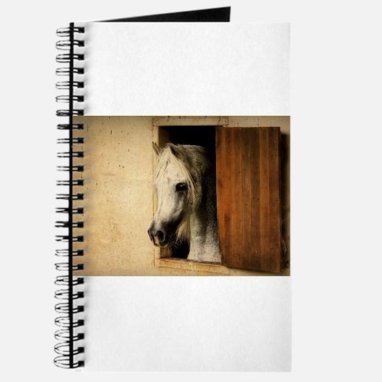 Cute Arabian Journal