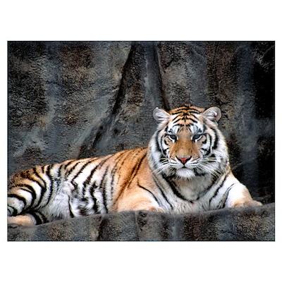 Resting Tiger Wall Art Poster