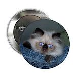 "Blue-Eyed Himalayan 2.25"" Button (10 pack)"