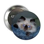 Blue-Eyed Himalayan Button