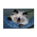 """Blue-Eyed Himalayan Kitten 17""""x11"""" Print"""