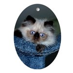 Blue-Eyed Himalayan Kitten Oval Ornament