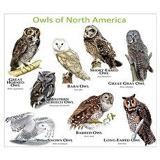 Owls of North America Wall Art Framed Print