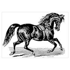Shiny Black Stallion Horse Wall Art Poster