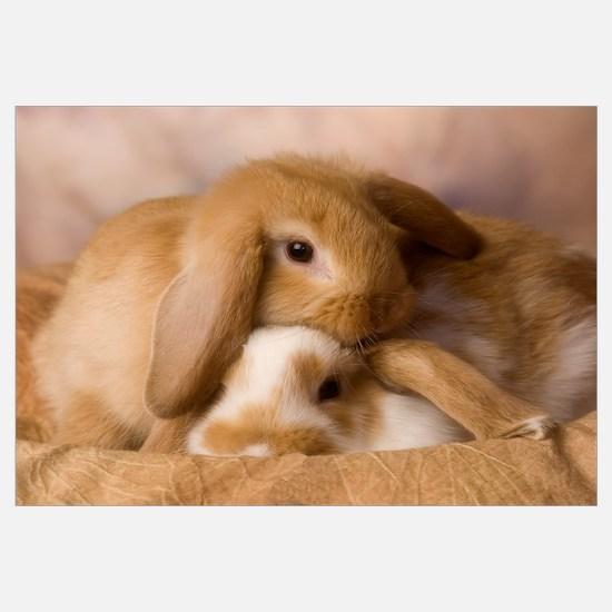 Cuddle Bunnies Wall Art