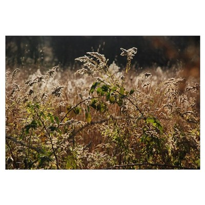 """Goldenrod"" Wall Art Framed Print"