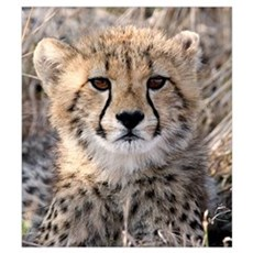 Cheetah Cub Wall Art Poster