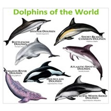Dolphins of the World Wall Art Poster