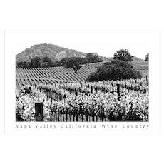 Napa Valley Vineyard Black + White Poster Poster