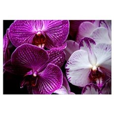 """Orchids"" Wall Art Framed Print"