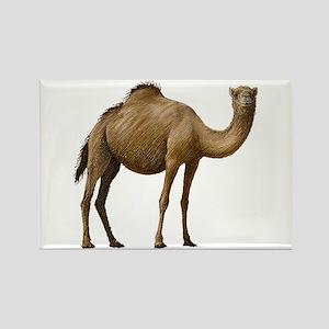 Camel Rectangle Magnet