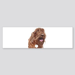 Chocolate Labradoodle3 Sticker (Bumper)