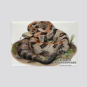Timber or Canebrake Rattlesnake Rectangle Magnet