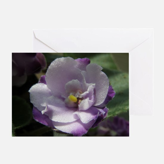 African Violet #02 Greeting Card