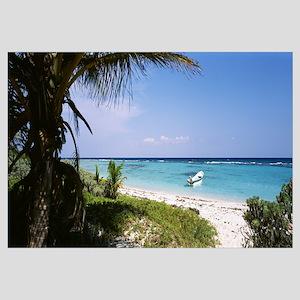 Palm tree on the beach, Caribbean Sea, Punta Bete,