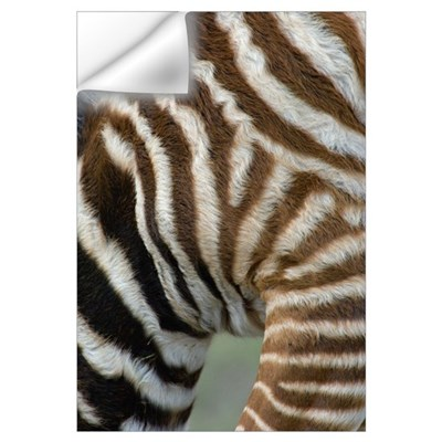 Close-up of a zebra, Ngorongoro Conservation Area, Wall Decal