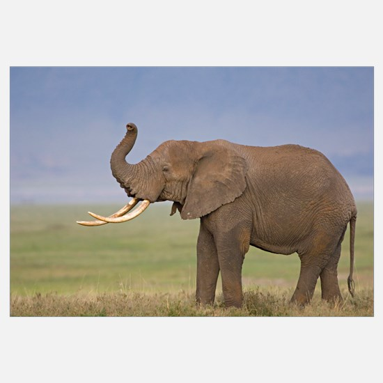 Side profile of an African elephant standing in a