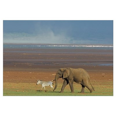 Side profile of an African elephant (Loxodonta afr Framed Print