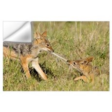 Side profile of two Silver-backed jackals pulling  Wall Decal