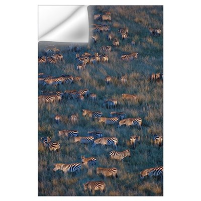 Herd of Zebras grazing, Masai Mara National Reserv Wall Decal