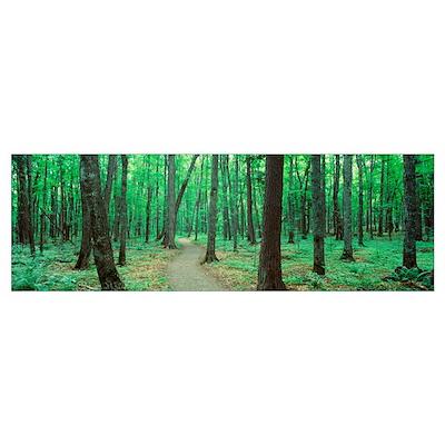 Michigan, Black River National Forest, Walkway run Poster