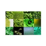 Green Photography Collage Rectangle Magnet (10 pac