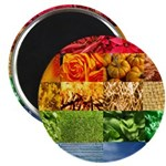 Rainbow Photography Collage 2.25