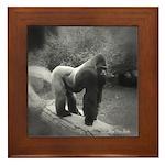 Silverback Gorilla Framed Tile