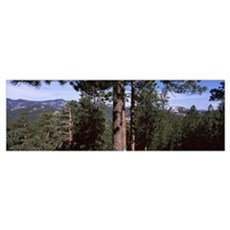 Trees with mountains in the background, Harney Pea Poster