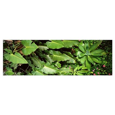 Tropical Vegetation, Costa Rica Framed Print