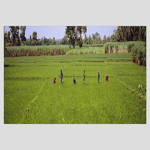 Group of women working in a rice field, Mysore, Ka