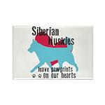Husky Pawprints Rectangle Magnet (100 pack)
