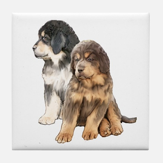 Tibetan Mastiff puppies Tile Coaster