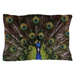 Peacock Pillow Case
