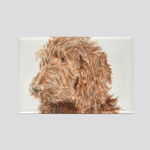 Chocolate Labradoodle 5 Rectangle Magnet