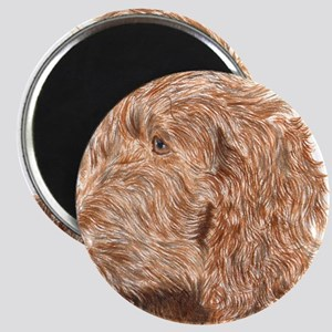 Chocolate Labradoodle 5 Magnet