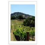 THE Tree in the Vineyard 20x30 Borderless Poster