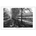 Fall Tree Lined Road, Napa Valley Poster, BW