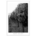 Rows of Vineyards, Sunset, Napa Valley Poster