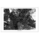 Black and White Harvest Grapes Large Poster